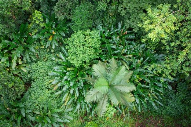 Jungle in St. Lucia