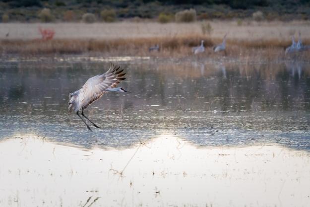 151120-festival-of-cranes-05652