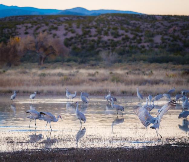 151120-festival-of-cranes-05735