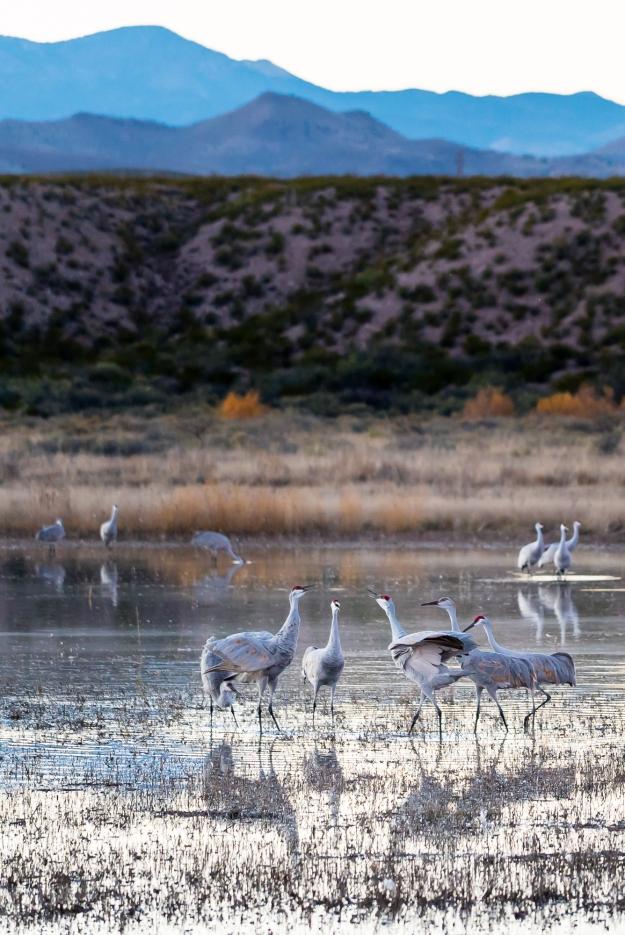 151120-festival-of-cranes-05791