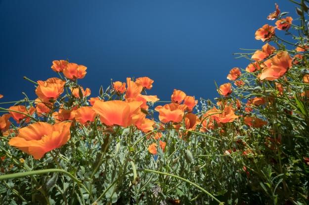 160604-denver-bot-garden-9593.jpg